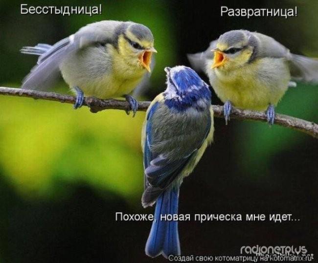 1385887779_mysli-vsluh-7.jpg