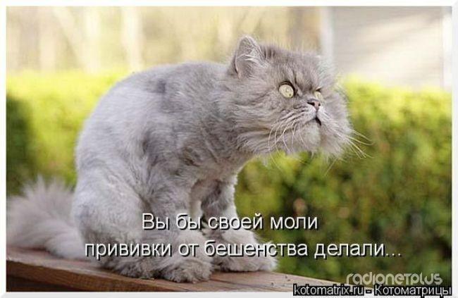1385887795_mysli-vsluh-18.jpg