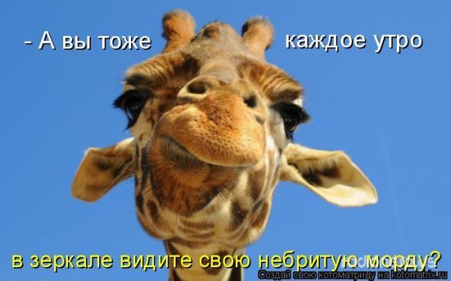 1385887809_mysli-vsluh-8.jpg