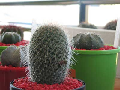 Cactus ID Welcomed 7