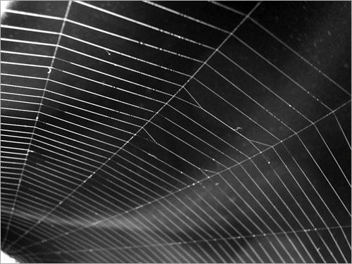 عظمة الخالق في خيوط العنكبوت .. Sp1