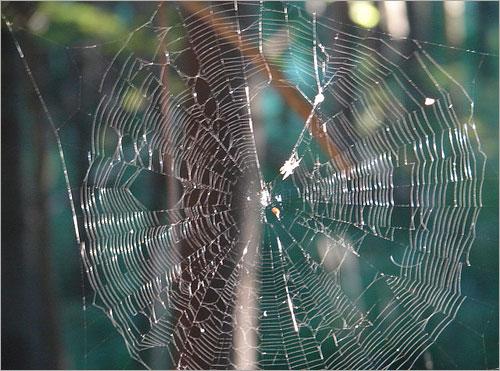 عظمة الخالق في خيوط العنكبوت .. Sp10