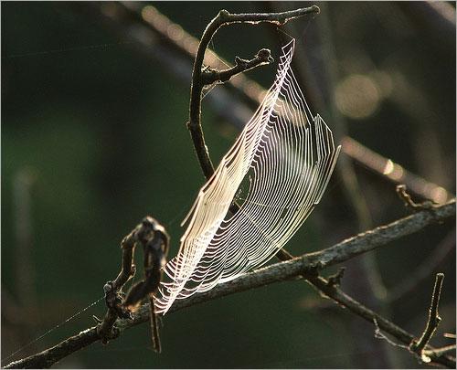عظمة الخالق في خيوط العنكبوت .. Sp2