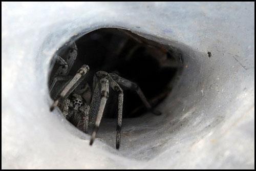 عظمة الخالق في خيوط العنكبوت .. Sp3