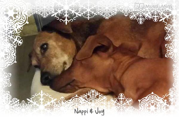 Nappi (Melusiinan Gabrielle) 30.03.2000-12.12.2016 Jul16
