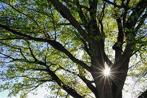 Дерево любви, счастья и здоровья Sb10065562a-001