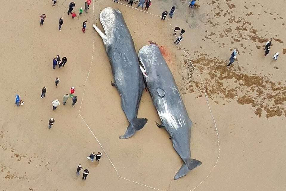 The Price of Our Comfortable Lives - Page 8 Sperm-whales