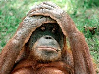 CSE INVESTORS DILEMMA Orangutan-797970