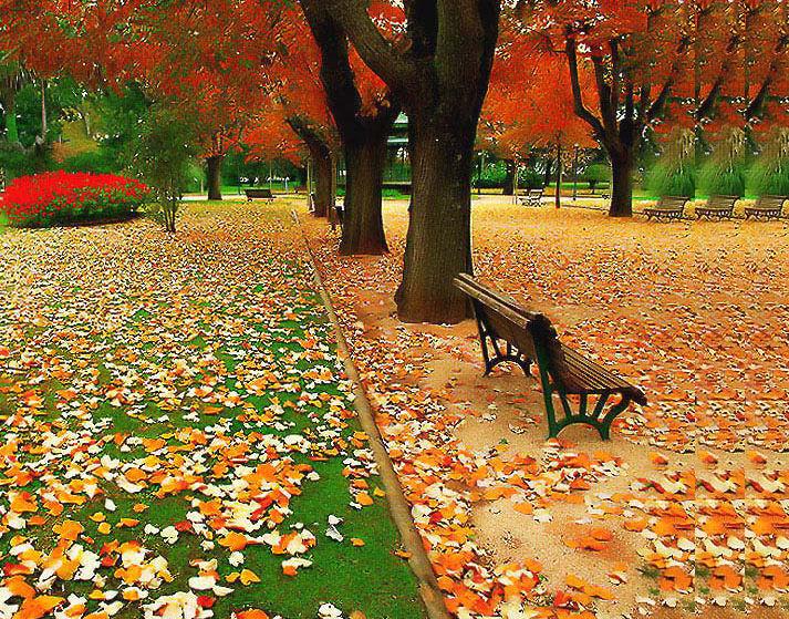 ... Y caen las hojas, llega ....¡¡¡ EL Otoño !!! - Página 3 Outono-iza1