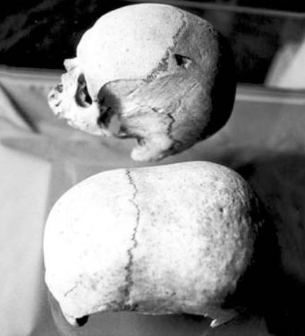 recent archaeological discoveries 11175maltaskulls