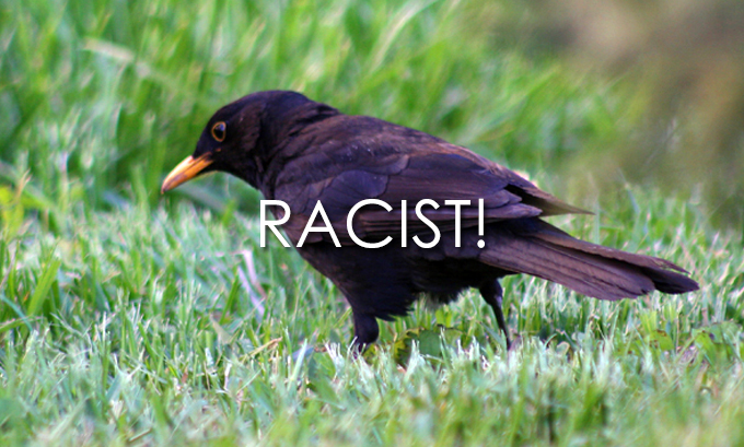 Suecia, un mundo feliz 32791Racist_birds_large