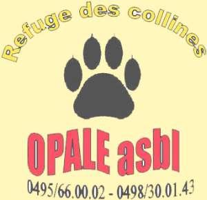 OPALE ASBL,  LE REFUGE DES COLLINES Image_039