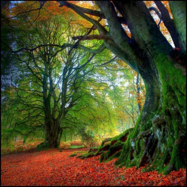 L'Énergie des arbres - Page 4 Les_plus_beaux_arbres_du_monde_automne-600x600