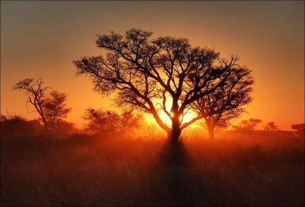 L'Énergie des arbres - Page 4 Les_plus_beaux_arbres_du_monde_kalahari_coucher_soleil-600x407