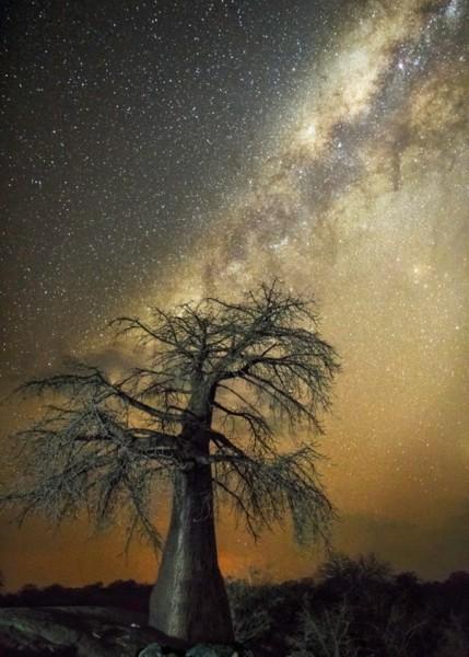 Le fil du partage  - Page 6 Arbres-les-plus-vieux-afrique-constellation-aquila-aigle-429x600