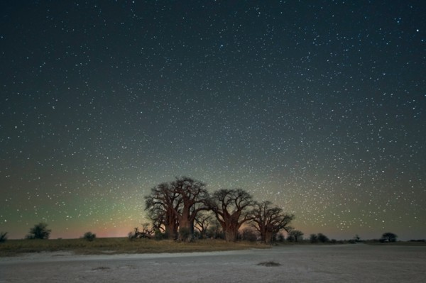 Le fil du partage  - Page 6 Arbres-les-plus-vieux-afrique-constellation-orion-600x399