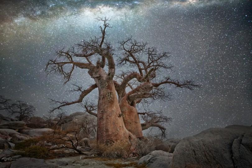 Le fil du partage  - Page 6 Arbres-les-plus-vieux-afrique-constellation-vela-voiles-810x540