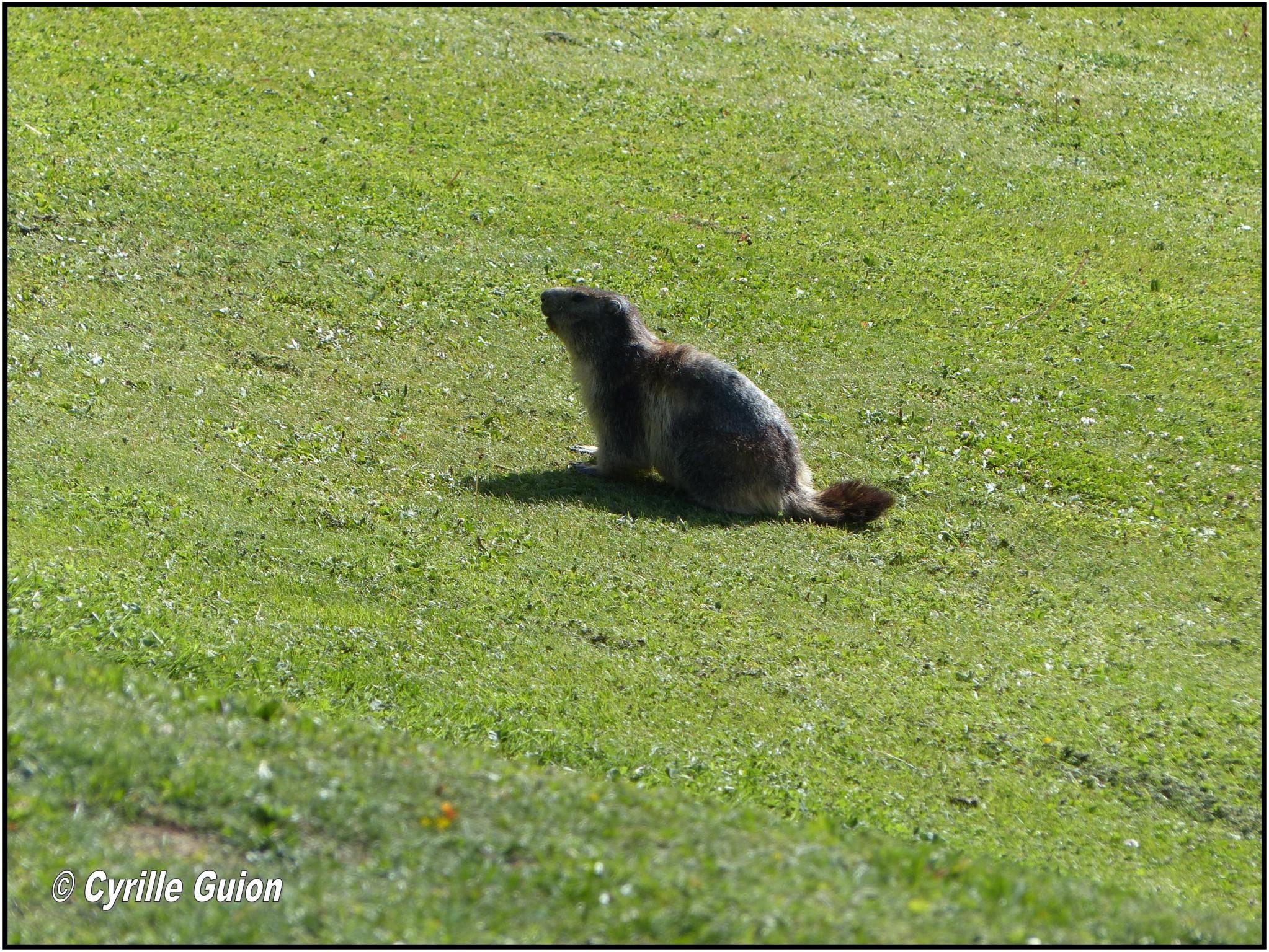 Quelques photos estivales, au pays des marmottes... Gallery_1137_2628_102884