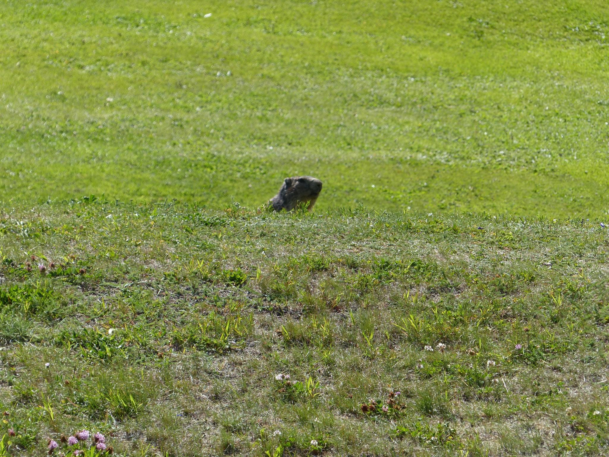 Quelques photos estivales, au pays des marmottes... Gallery_1137_2628_1332126