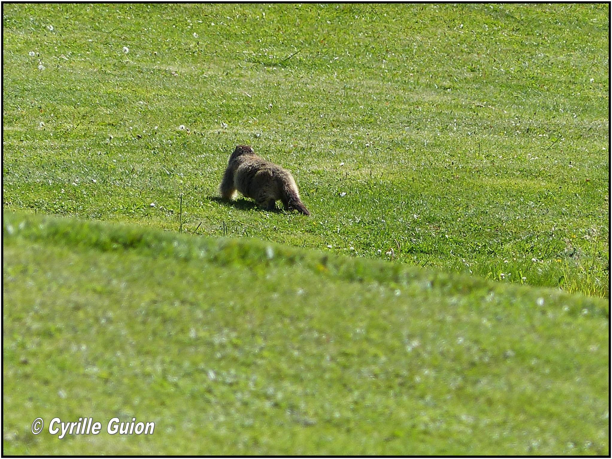 Quelques photos estivales, au pays des marmottes... Gallery_1137_2628_140579