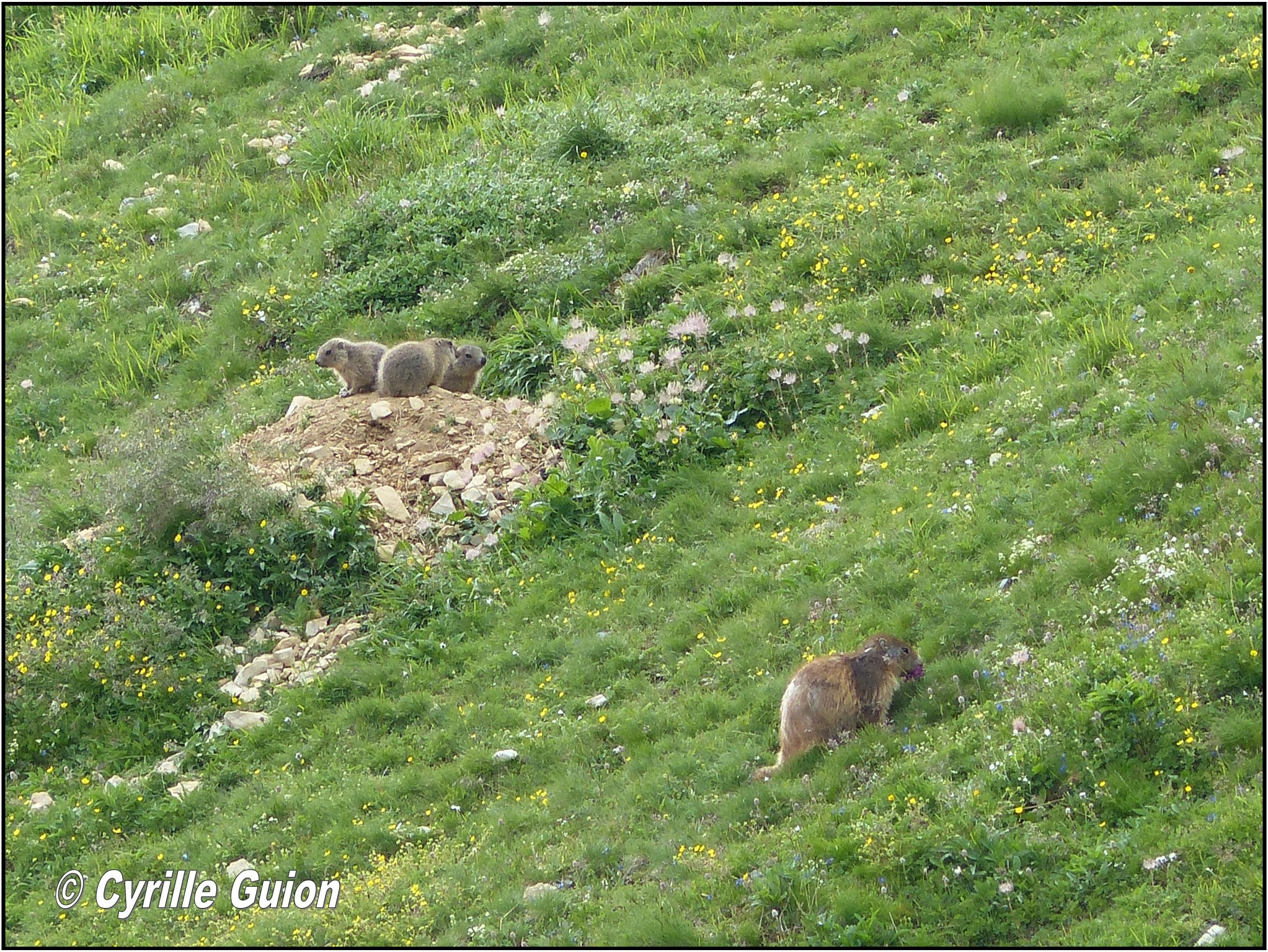 Quelques photos estivales, au pays des marmottes... Gallery_1137_2628_1592669