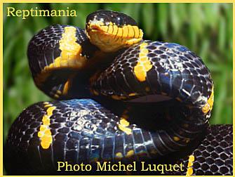 l'animal d'Ajonc à découvrir trouvé par Jambi + Martin Boa-dendrophila