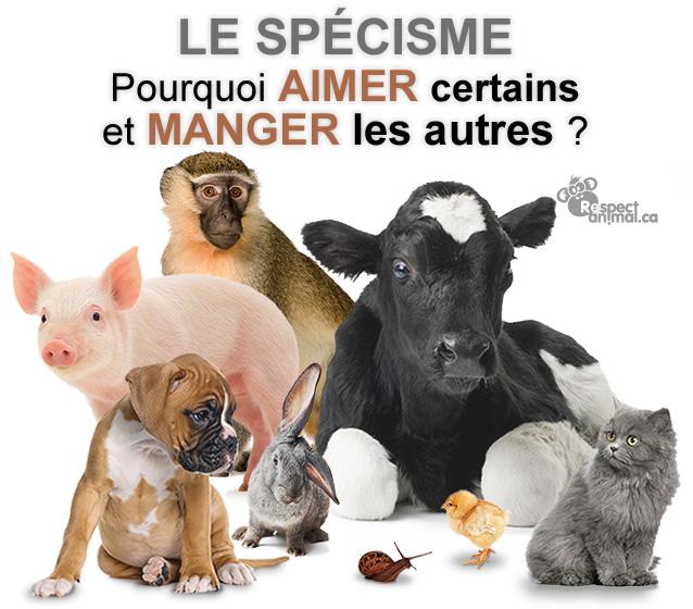 Vegan Attitude Animaux-specisme-antispecisme-04