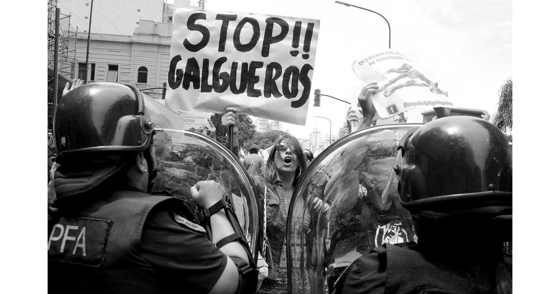 Prohibición de las carreras de Galgos Pasion_galguera_caja_3