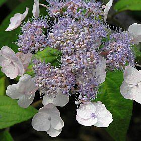 VƯỜN CÂY ĐV II - Page 14 12661_flower