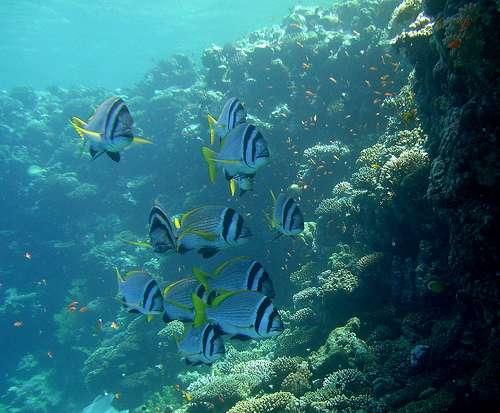 More i podmorski svijet Belize-undersea-789896-789918
