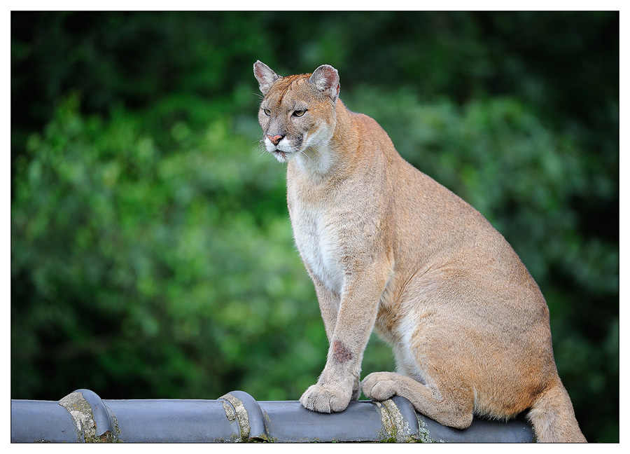 Sortie au Zoo d'Olmen (à côté de Hasselt) le samedi 14 juillet : Les photos D3S_5576