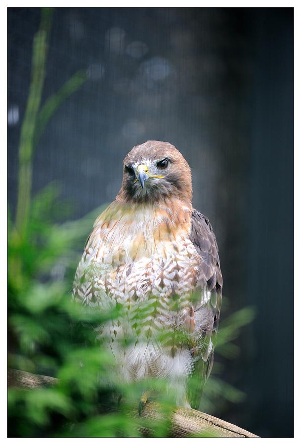 Sortie au Zoo d'Olmen (à côté de Hasselt) le samedi 14 juillet : Les photos D3S_5595
