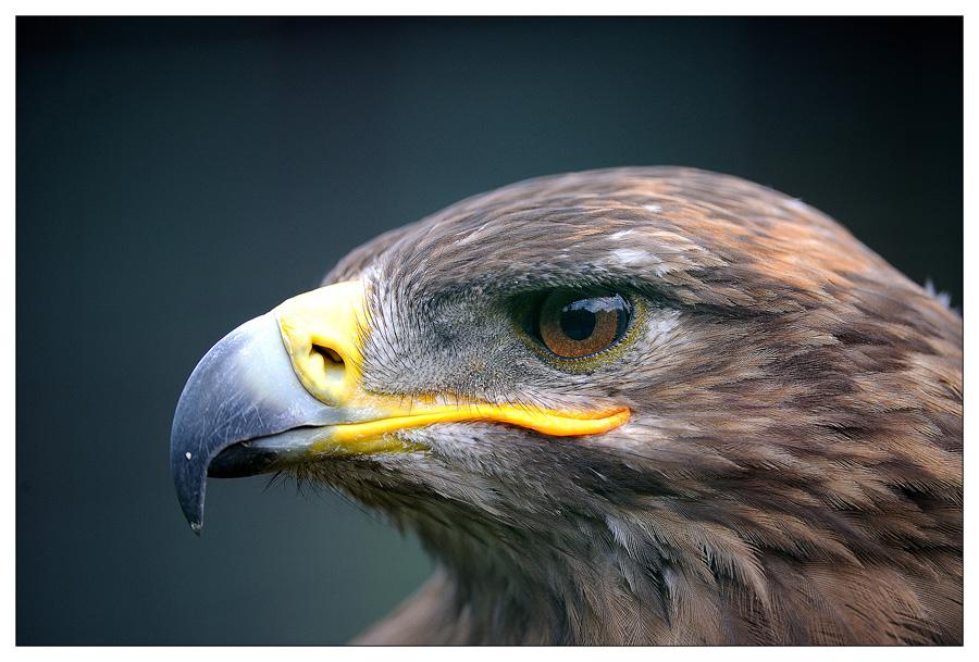 Sortie au Zoo d'Olmen (à côté de Hasselt) le samedi 14 juillet : Les photos D3S_5600