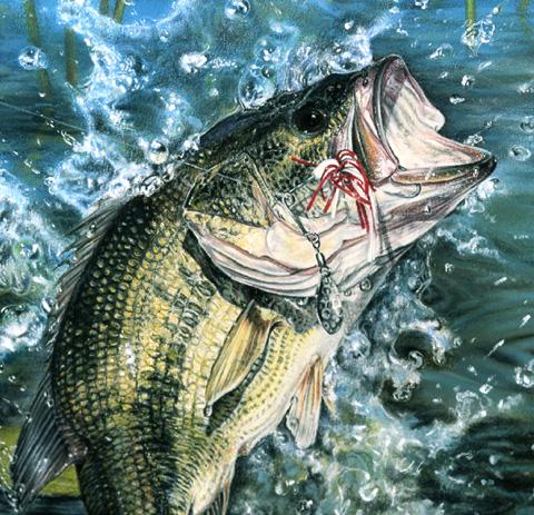 Omaž ribolovcu i ribolovu - Page 5 Basscl