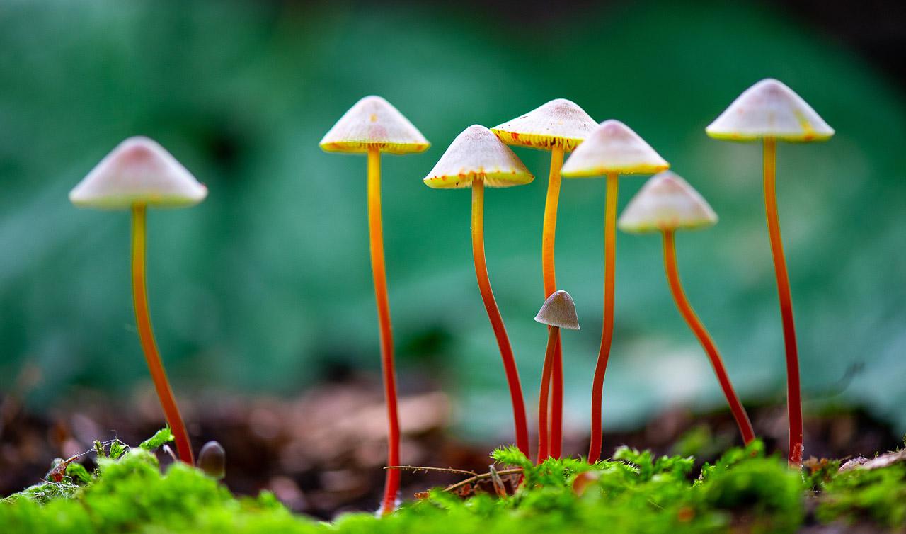 Sortie champignons : Les photos. ND5_2193