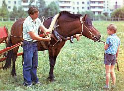Как приучить молодую рабочую лошадь к упряжи - ошибки Sani5001