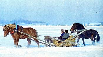 Как приучить молодую рабочую лошадь к упряжи - заездка, 2-й способ  (Г. Г. КАРЛСЕН ИСПОЛЬЗОВАНИЕ РАБОЧИХ ЛОШАДЕЙ В КОЛХОЗАХ)  Sani5002