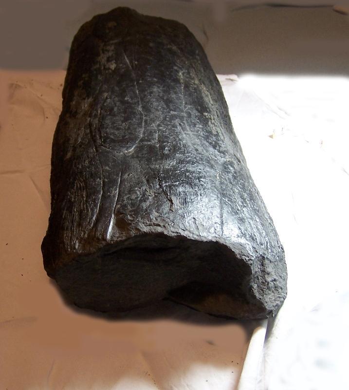 Ptychopteris Corda , 1845 . Fossiles_5el0vkpueyj5ntq91vh1