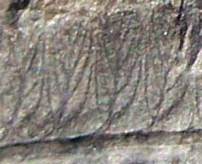 Diplazites  Göeppert , 1836 . Fossiles_5g4gstwj88clbs1hp5jd