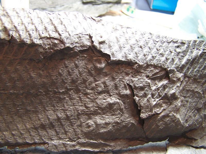 Sigillaria et zone d'insertion des sigillariostrobus - Page 2 Fossiles_8qh14y20gnrec6tg7dva