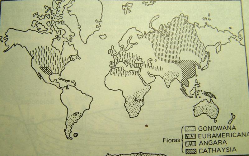 Calamites Schlotheim ,1820.  Annularia sternberg , 1822 .  - Page 2 Fossiles_b3q39fkh4adg1mhslnw5
