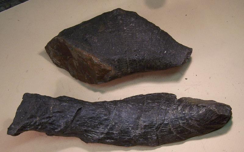 Calamites Schlotheim ,1820.  Annularia sternberg , 1822 .  Fossiles_eda0a8m4ber7fphcx15z