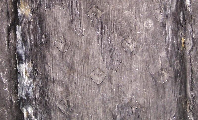 Asolanus Wood, 1860. Fossiles_jphx76lf1mes8nwhxkum