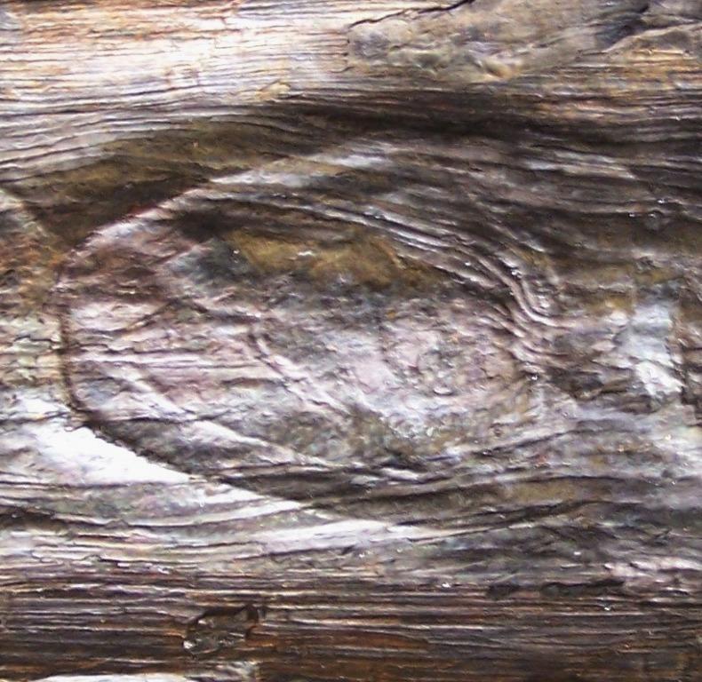 Megaphyton Artis , 1825 . Hagiophyton Corsin ,1948.  Fossiles_yzhaemqkqn6rh1nfj637