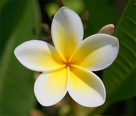 Oui je trippe sur les fleurs, et vous ? Pt49255