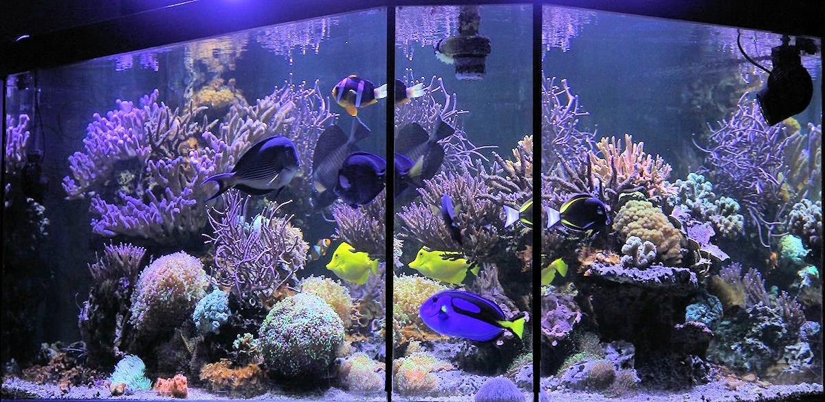 Le récif d'Hervé Aquarium