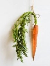 La carotte Alimentation-161