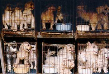 περί αγοραπωλησιών ζώων 1260302858