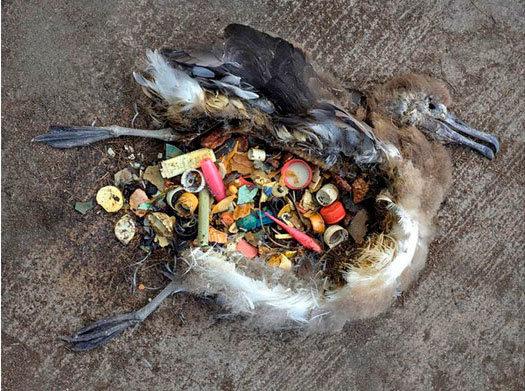 """Basura de plásticos, microplásticos: """"amenaza tóxica para la vida"""" marina. [vídeo] - Página 2 2017100916402755108"""