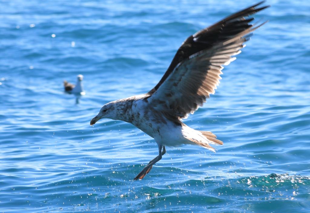 un oiseau à découvrir -ajonc- 5 août trouvé par Martin et Martine  Labbe